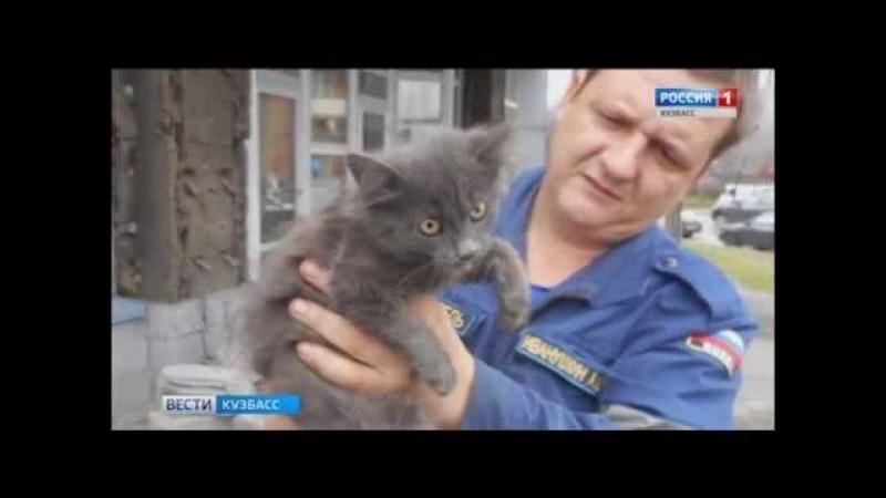 Новокузнецкие спасатели вызволили из беды собаку и котёнка