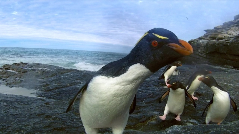 Пингвины 1 / Penguins — Spy In The Huddle 1 (2013)