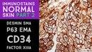 Immunohistochemistry in Normal Skin 2 p63, EMA, desmin, SMA, CD34, Factor XIIIa