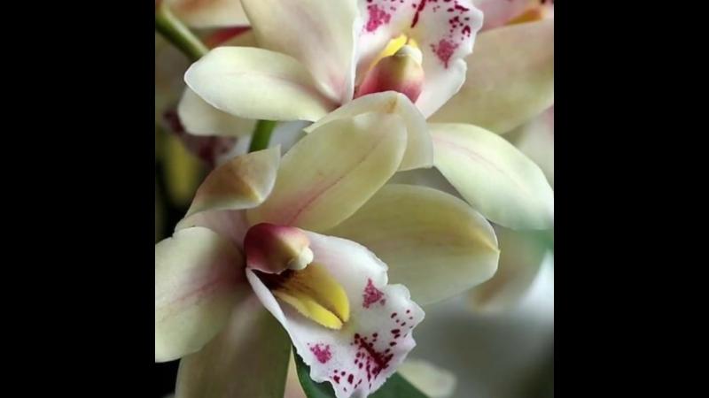 Natura Fanpage - Oggi saluto con orchidee 💛❤💙