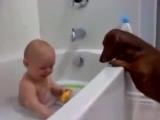 Дети и животные умиляют.Какой заразительный смех у малыша.