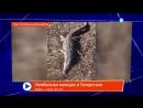 Мобильный Репортер 18 04 2018 Татарстан 24