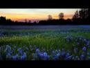 Глава 3.Помехи в медитации-1. Осознанность, блаженство и за их пределами. ॐ Аджан Брахм