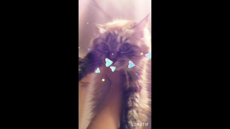 Кошки тоже умеют летать😹💙😻❤️😽💕