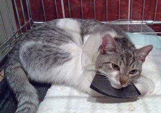 Потерянный кот в минске
