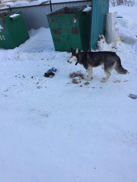 Недавно было объявление о пропаже похожей собаки. Видели ее возле мага
