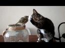 Gentle Kitty Touching BirdŸ˜'