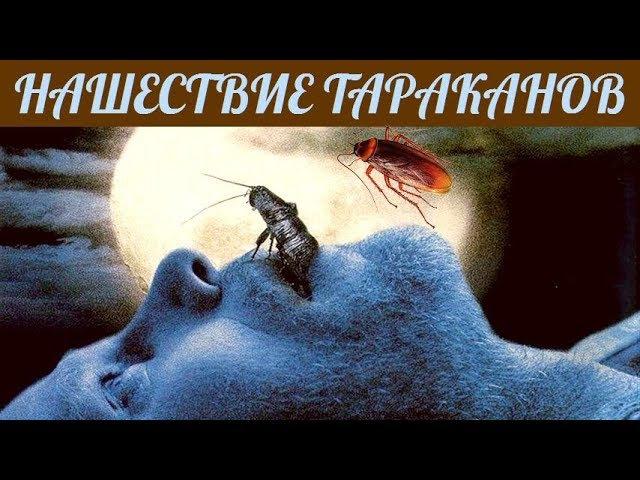 НАШЕСТВИЕ ТАРАКАНОВ Ужасы Триллер Фантастика Зарубежные Фильмы Ужасов смотреть онлайн без регистрации