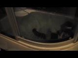 Кот говорит Открой 2 · #coub, #коуб