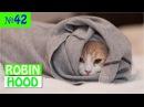 ПРИКОЛЫ 2017 с животными. Смешные Коты, Собаки, Попугаи Funny Dogs Cats Compilation. Февраль №42