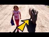 Маленькая Девочка выгуливает НОСОРОГА , ОПАСНЫ  ли такие прогулки