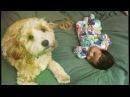 Sahida Apsara - ft. Dub FX • Baby Steps