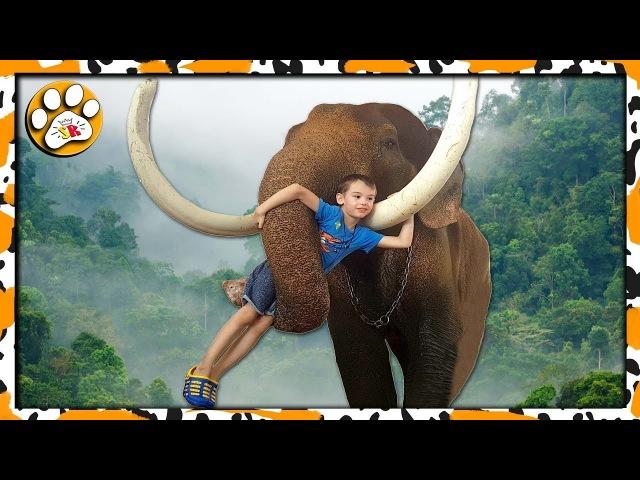 МИР СЛОНОВ 🐘 КОКОСОВОЕ МОЛОКО и ВЕЧНОЕ ЛЕТО Тайланде ELEPHANTS WORLD in Thailand