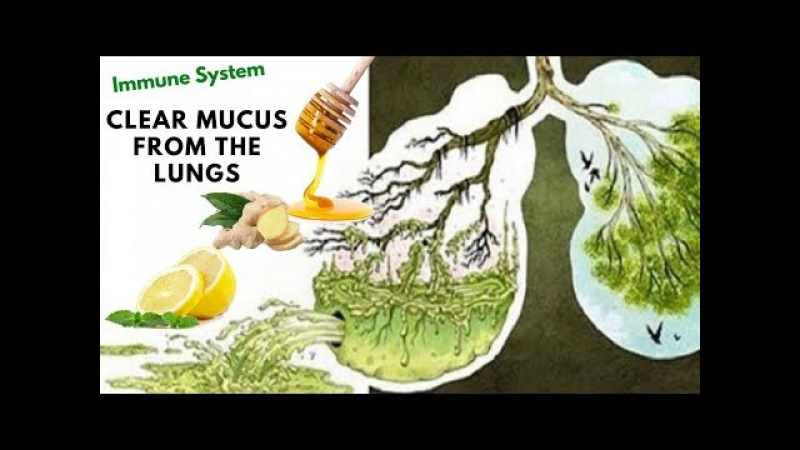 Are You Want To Clear Mucus From The Lungs And Want Strengthen The Immune System