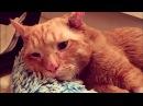 Особенные коты НЕОБЫЧНЫЕ КОТЫ Истории спасения кошек