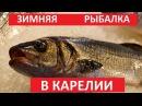 Зимняя рыбалка в Карелии, рыбалка на само-ловки
