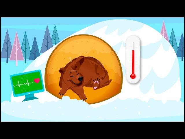 Зимняя спячка   Почему животные впадают в зимнюю спячку   Обучающее видео для детей