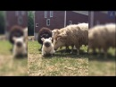 Funny animals will make you burst into laughter Funny animal compilation 3