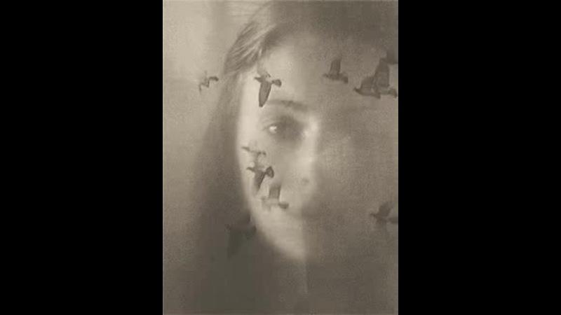 Silence of the heavens Безмолвие небес Music uthor Vitaly Dudnikov Солнцемёд Sun Honey 1 · coub коуб