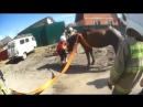 Лошадь провалилась в дорожную яму в Архангельске