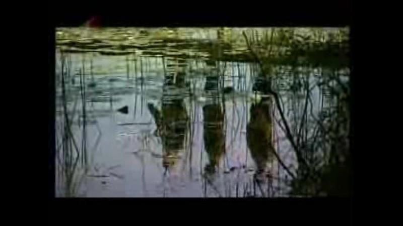 Зямля Беларуская (Первый национальный, 01.11.2009) Край крыштальных росаў