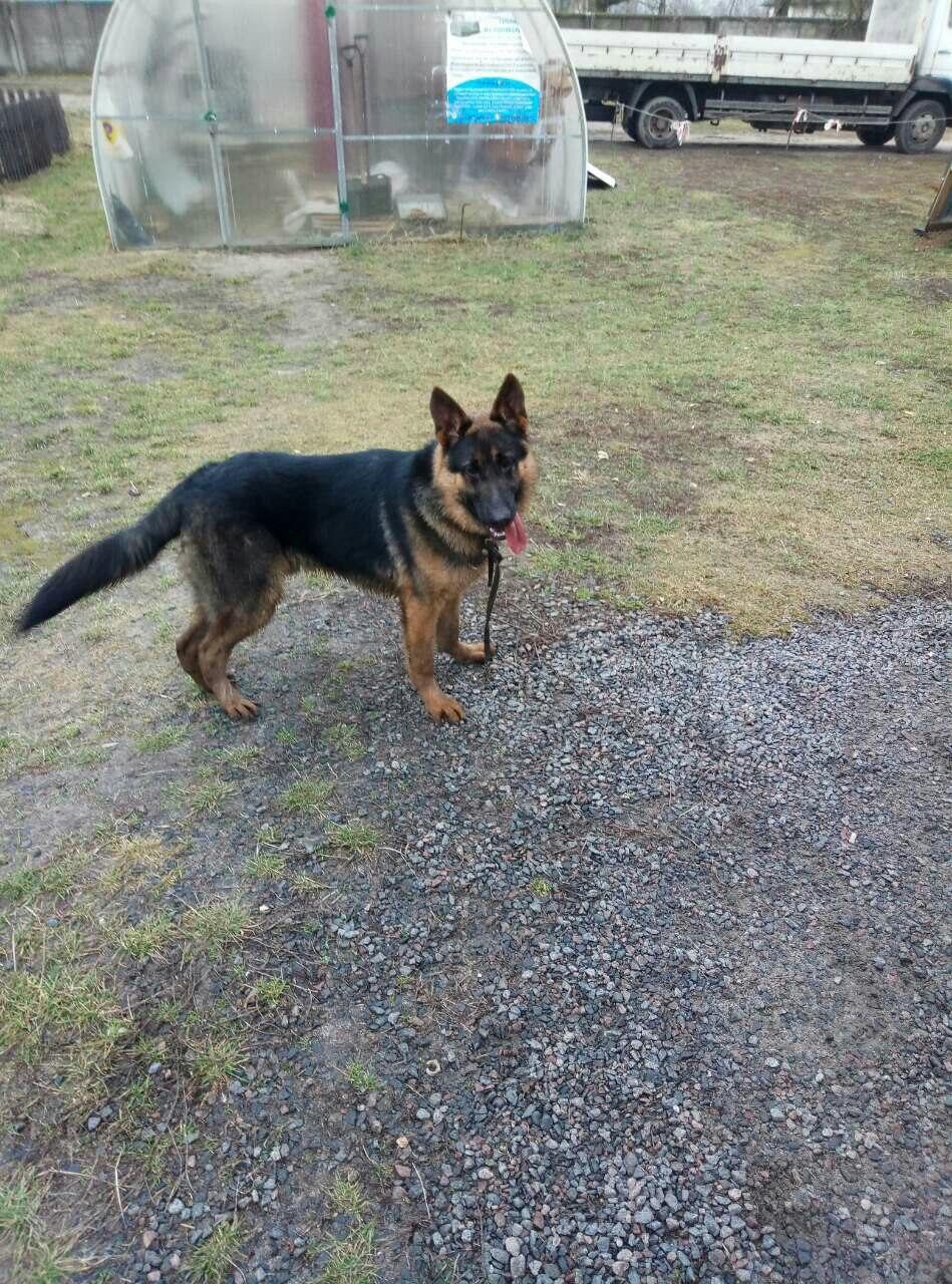 Найден собака в районе старого ЗАГСа.