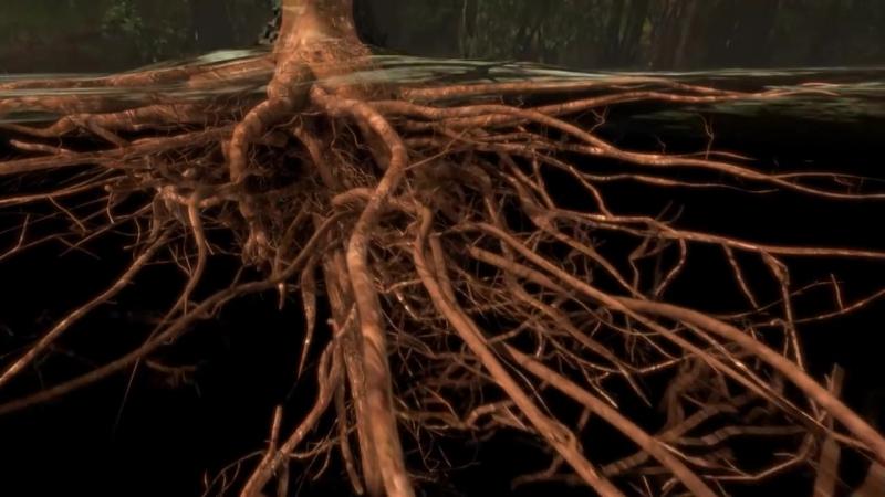 California Academy of Sciences - Как деревья транспортируют воду из корней в листья