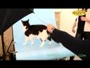 Выставка кошек Winner Cat, Харьков 04-05 02 2017 5 часть