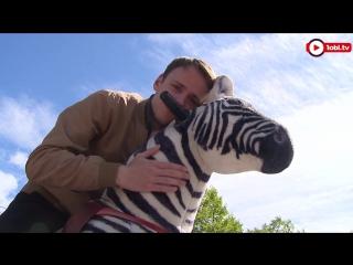 Как обращаться с зеброй