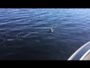 Аландские острова Рыбалка