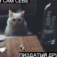Анкета Михаил Николаев