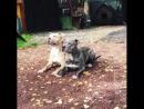 Обучение собак в идеальной координации 🐶😃👍
