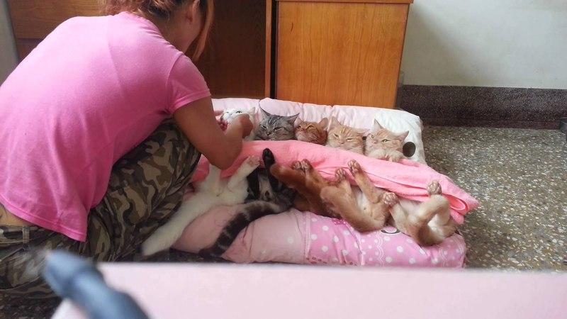 Надо иметь силу воли, чтобы уложить спать котов!