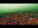 Реакция ОКУНЯ на БЛЕСНУ в идеально прозрачной воде Зимняя рыбалка и Подводная съемка