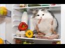 Смешные кошки приколы про кошек и котов 2018 5 СМЕШНЫЕ ВИДЕО С КОТАМИ 2018