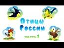 Птицы России часть 1 Карточки Домана Развивающее пособие для самых маленьких
