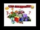 ☀🌺 Петуния Виола Дельфиниум Овощи ЧТО посеять в этом году?