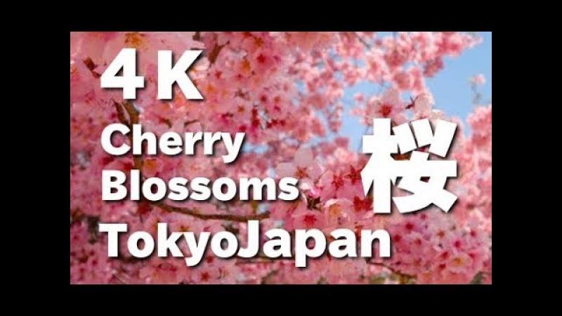 [4K]Shinjyuku Gyoen National Garden in TOKYO