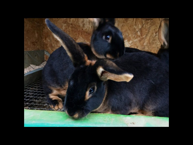 Крольчата НЗБ и Рекс 1 1 5 месяца