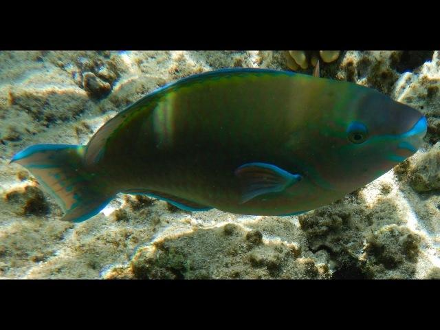 Египет/Egypt (part 8). Красное море. Подводные съемки. Целое море рыбы! Мелководье 3/4