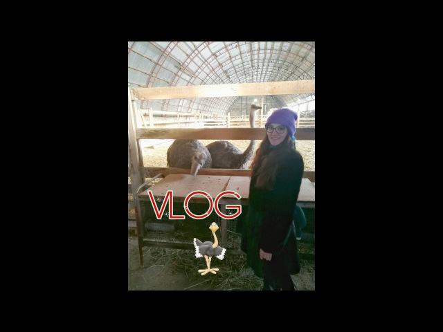 VLOG: 2.01.2018 Поездка на страусиную ферму.