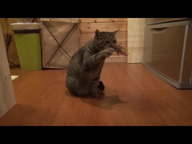 Кошачий музыкальный инструмент
