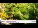 «Это я для себя» В Одессе правоохранители нашли у мужчины дома плантацию конопли