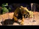 Доисторический мир Древние животные Саблезубый тигр Документальный фильм Nation