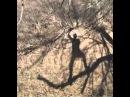Asante Sana Squash Banana Rafiki Fail Guy in Tree