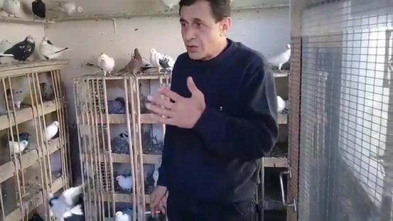 Совет от Гагика 35. Про селекции голубей1