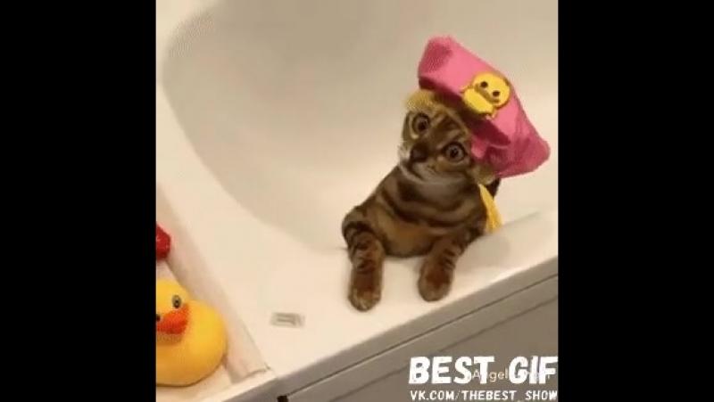 Когда сидишь в ванной и слышишь какие-то странные звуки в квартире