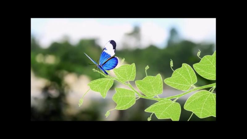 История пассифлоры (страстоцвет) из Однажды в лесу Люка Жаке (2013)