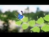 История пассифлоры (страстоцвет) из