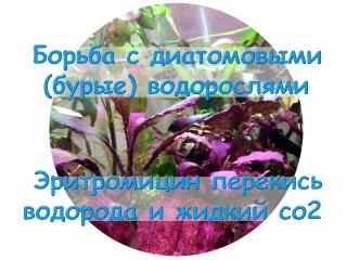 Борьба с диатомовыми (бурые) водорослями Эритромицин перекись водорода и жидкий со2